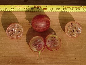 Gooseberry - Sectioned gooseberries showing seeds