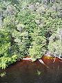 Gordon-River-edge Tasmania.jpg