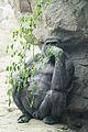 Gorilla Camoflauge (17860043319).jpg