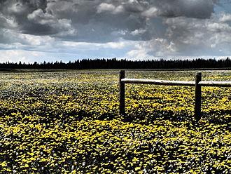 Gravelly Range - Wildflowers July 2013