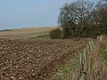 Great Litchfield Down - geograph.org.uk - 305952.jpg