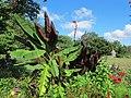 Green Spring Gardens in August (14733959500).jpg