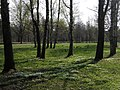 Grove - panoramio (1).jpg