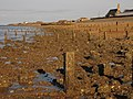 Groynes on Sheerness Beach - geograph.org.uk - 1278929.jpg