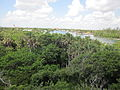 Gumbo Limbo tower view Intracoastal.JPG