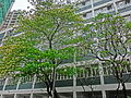 HK Mid-Levels Pokfulam Road St Paul's College green trees April 2013.JPG