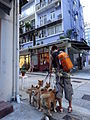HK Sheung Wan evening Tai Ping Shan Street Dog walking boy with short July-2015 DSC.JPG