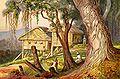 Haeckel 16.jpg