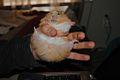 Hamster129.jpg