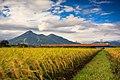 Harvest (160488595).jpeg