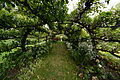 Heale House and Gardens Apple trees trained over a preformed arch.JPG