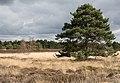 Heath and bogland on eastern side of A338 - geograph.org.uk - 746963.jpg