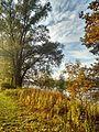 Heidenfahrt Rheinufer 2015 11 05.jpg
