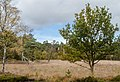 Herbst Im Schnaakenmoor (126430251).jpeg