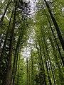 Hiking area in Fischen, Germany.jpg
