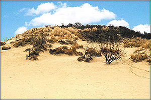 Geography of Belgium - Dunes in Koksijde, at the North Sea