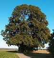 Hoher Baum.jpg