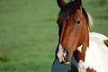 Horse (244789212).jpg