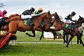 Horse racing (3309218023).jpg