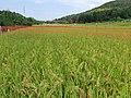 Hosonocho, Kasugai, Aichi Prefecture 487-0001, Japan - panoramio.jpg