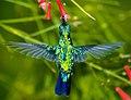 Hummingbird and Peace I.jpg