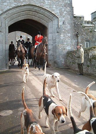 Fox hunting - Master of foxhounds leads the field from Powderham Castle in Devon, England, with the hounds in front.