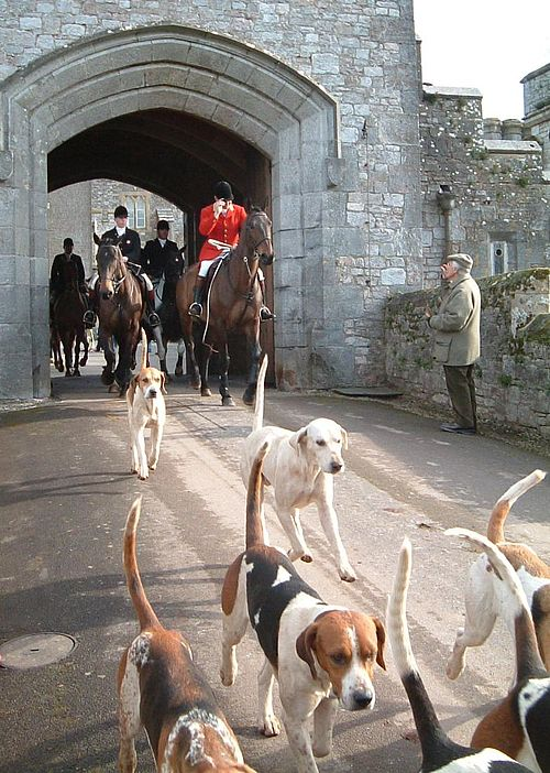 Master of foxhounds leads the field from Powderham Castle in Devon, England, with the hounds in front.