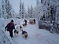 Husky Ride (5316250698).jpg