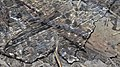 Ice on the Banks of the Grand River - Kitchener, Ontario 03.jpg