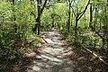 Ichetucknee Springs State Park Blue Hole Trail 2.jpg