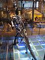 Iguanodon2 28-12-2007 14-20-05.jpg