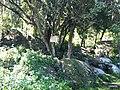 Iguape - SP - panoramio (260).jpg