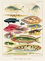 Illustration from The Great Barrier Reef of Australia (1893) by William Saville-Kent from rawpixel's own original publication 00017.jpg