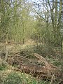 In the woodland - geograph.org.uk - 1240493.jpg
