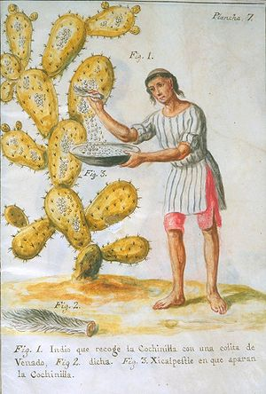 Agriculture in Mexico - Indian Collecting Cochineal from a nopal cactus with a Deer Tail by José Antonio de Alzate y Ramírez (1777)