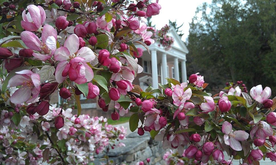 Insight Meditation Society's retreat center amidst blossoms