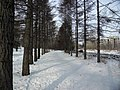 Irkutsk. Akademgorodok. February 2013 - panoramio (127).jpg