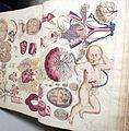 Istituto di anatomia umana normale, museo, illustrazioni antiche 05.JPG