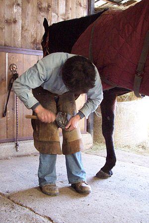 Horses require routine hoof care