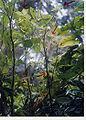 Jaltomata procumbens epiphyt.jpg