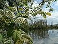 Jar pri Ontáriu - panoramio.jpg