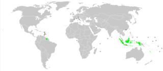 Javanese language Austronesian language