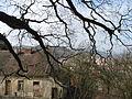 Javor klen v Lomnici (3).JPG