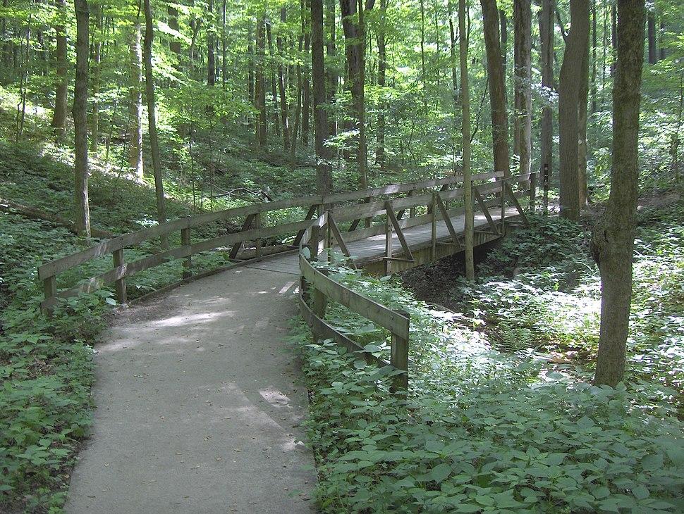 Jcf-tuliptree trail 6-2