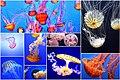 Jellyfish collage.jpg