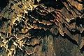 Jenolan Caves 18.jpg