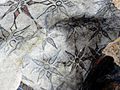 Jerozolima-grota-06.jpg