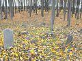 Jewish cemetery Smolevichi 2f.jpg
