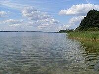 Jezioro Miedwie.jpg