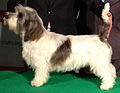 JillyCrufts-cropped2.JPG